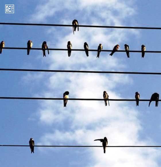 Golondrinas en el alambre